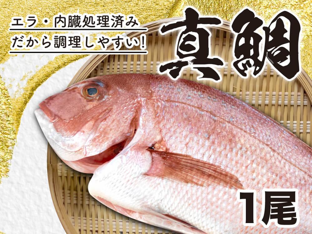 【9/1〜9/14期間限定特価】真鯛1匹セミドレス【配送日指定不可】