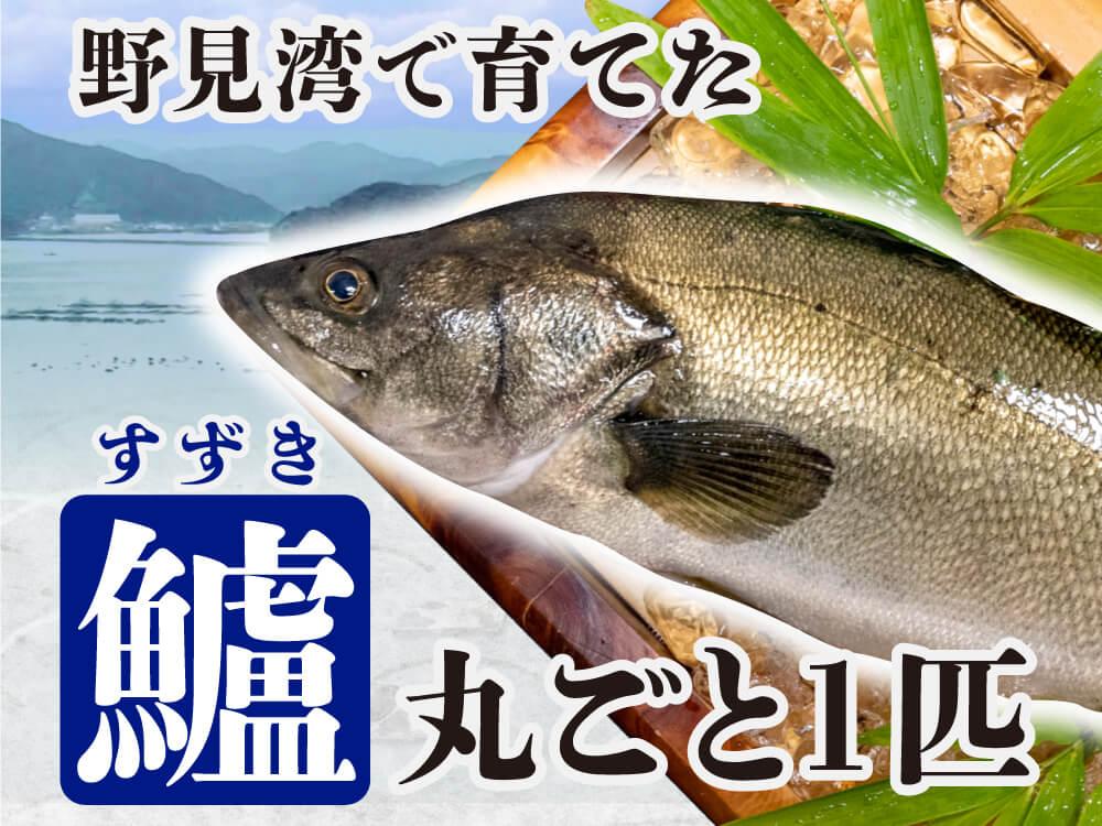 野見湾で育った夏の高級魚「スズキ」1匹丸ごと