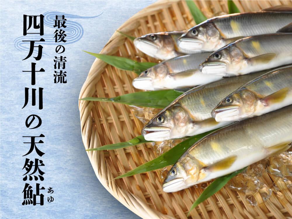 【高知自慢の逸品】最後の清流・四万十川の天然アユ 500g
