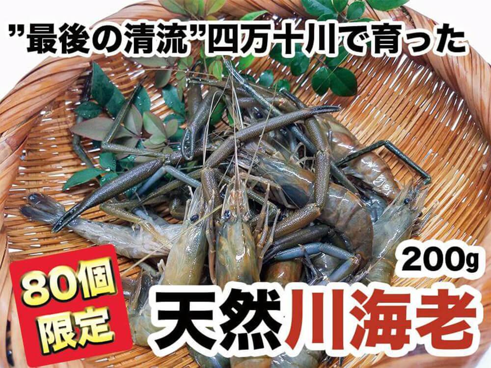 """【希少】""""最後の清流""""四万十川で育った 天然川海老 200g"""